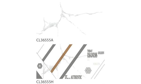 CL36555